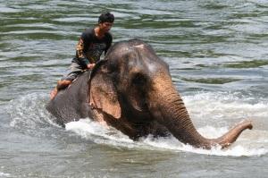 Elefanten baden für ihr Leben gerne