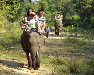 Nicht alle Touristen-Elefanten werden misshandelt