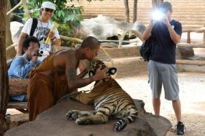 Mönche spielen mit bei der Ausbeutung der Tiger