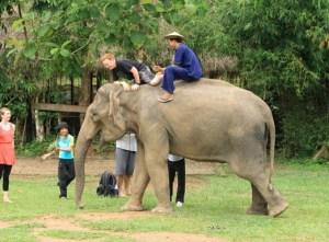 Die Jumbo-Dame Mae Uak im Elephant Village bei Xieng Lom