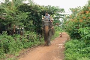 Auf dem Weg zur Arbeit - ein Dorfelefant aus Kiet Ngong