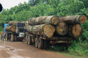 Trauriger Alltag in Südlaos - Holztransporte