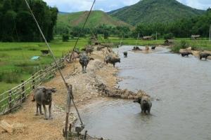 Ich hoffe, den schönen Shan-Staat wiedersehen zu können