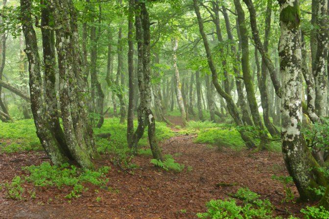Wandern in der Natur © NFI